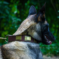 Belgian Malinois Brass Plated Leather Dog Collar Ancient Style