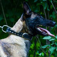 Double-Ply Leather Dog Collar for Belgian Malinois Royal Style