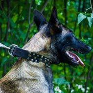 Malinois Collar Leather Handmade with Mix of Super Modern Decor