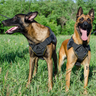 Sport Dog Harness UK of Strong Nylon for Belgian Malinois