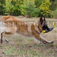 Belgian Tervuren Training Bite Tug of French Linen with Handles