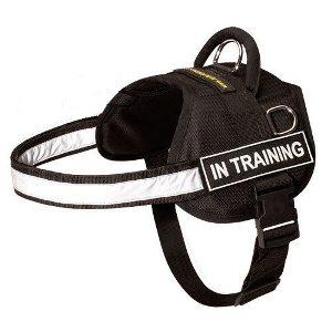 Best Buy Dog Harness