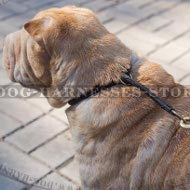 Best Collar for Shar-Pei Behavior Training and Correction