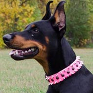 Best Dog Collar for Doberman Girl of Pink Leather for Walking