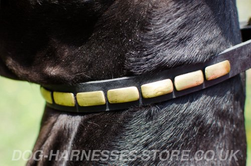 Narrow Leather Dog Collar UK