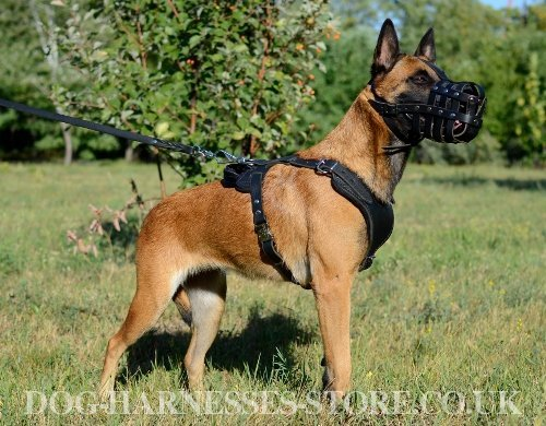 Best Dog Harness to Buy