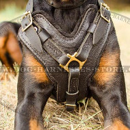 Best Harness for Doberman of Leather & Brass Hardware