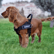 Best Harness for Dogs like Spaniel with ID Patches