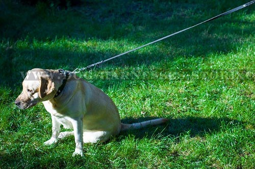Best Dog Leashes UK