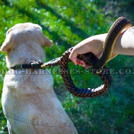 Best Leash for Labrador of Braided Leather, Nappa Lined Handle