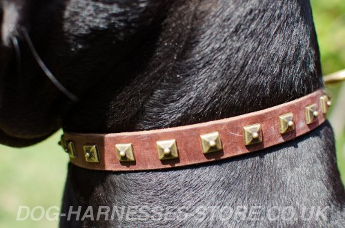 Thin Dog Collars UK