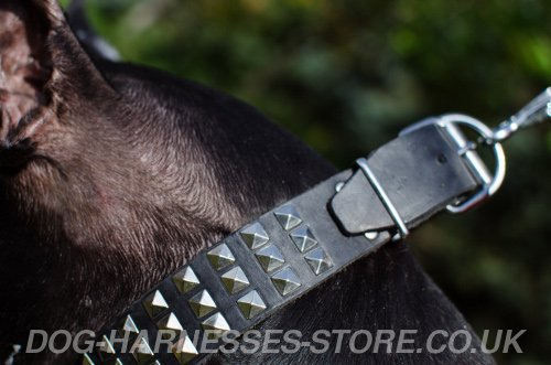 Trendy Dog Collars UK