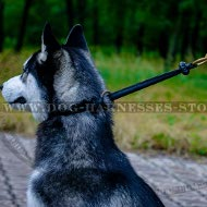 Best Training Collar for Siberian Husky Behavior Correction