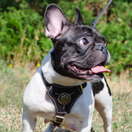 Royal Dog Harness with Nappa Padding for French Bulldog