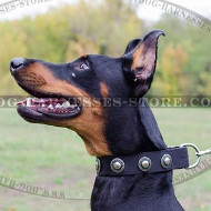 Black Studded Dog Collar with Silver Conchos of Wide Nylon Strap