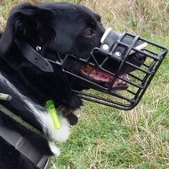 Border Collie Muzzle of Rubber Covered Stainless Steel Wire Cage