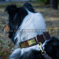 Brass Plated Leather Dog Collar Ancient Design for Collie Walks