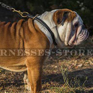 British Bulldog Obedience Training Rolled Leather Choke Collar