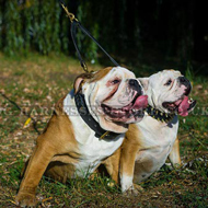 Wide Leather Dog Collar with Braided Decor for British Bulldog