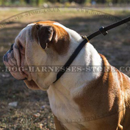 British Bulldog Leash and Leather Choke Collar Set for Obedience