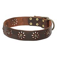 Natural Leather Dog Collar UK