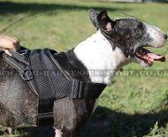 English Bull Terrier Harness UK, Nylon, Multi-Purpose
