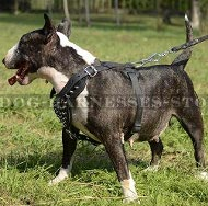 Leather Dog Harness with Shining Spikes for English Bull Terrier