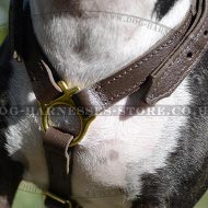 Bull Terrier Leather Walking and Tracking Lightweight Harness