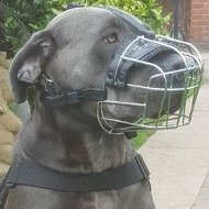Cane Corso Muzzle Wire Perfectly Ventilated for Everyday Use