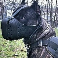 Cane Corso Muzzle for Training, Strong and Reinforced Leather
