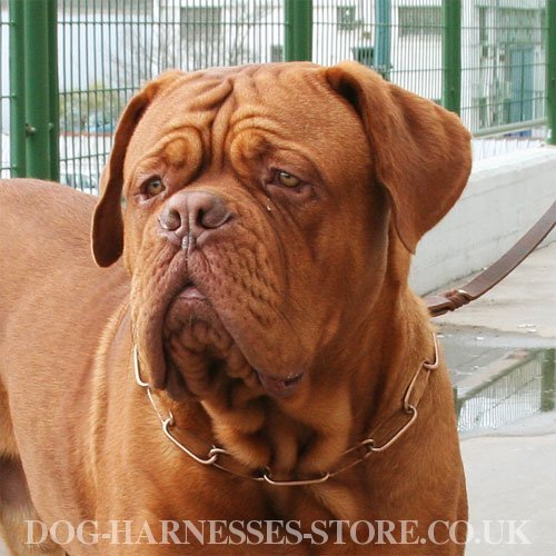 Chain Dog Collars UK