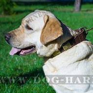 Chic Dog Collar with Bronze-Like Large Brass Plates for Labrador
