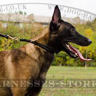 Rolled Leather Choke Dog Collar, Belgian Shepherd Stop Pulling