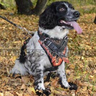Dog Harness Advantages
