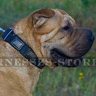 Collar for Shar-Pei Dog, Leather with Ancient-Like Nickel Plates