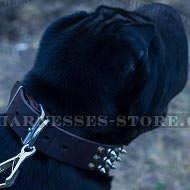 Collar for Shar-Pei Dog of Cones and Spikes Decorated Leather