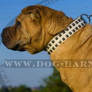 Collar for Shar-Pei Dog of White Leather and Square Nickel Studs