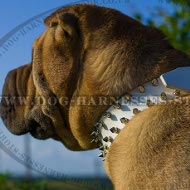 Collar for Shar-Pei Dog of White Leather with 2 Rows of Spikes