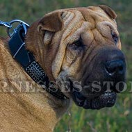 Collar for Shar-Pei, Leather with Semi-Antique Plates and Cones