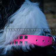 Hot Pink Studded Dog Collar Caterpillar Style for Female Collie