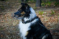 Collie Dog Muzzle for Comfortable and Safe Walking and Training