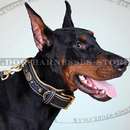Designer Dog Collar with Padding for Noble Doberman