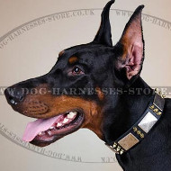 Doberman Collar with Golden Spikes and Silver Plates for Walks