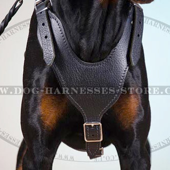 Doberman Harness of Smooth Design for Walks & Training