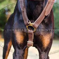 Doberman Harness UK for Long Walks, Training & Bikejoring