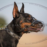 """Mad Max"" Style Doberman Collar with Nickel Plates & Cones"