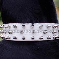 Doberman Pinscher Spiked Collar of Genuine White Leather
