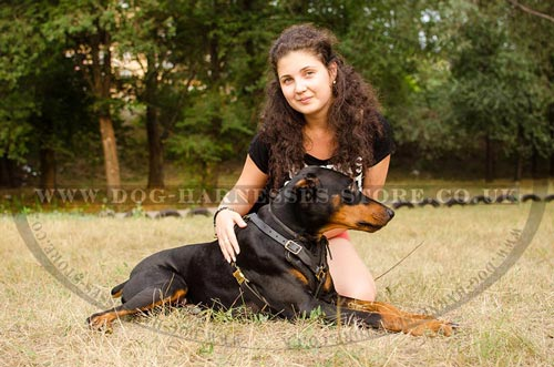 Doberman in Harness with Trainer