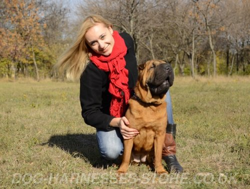 Dog Behavior Training UK