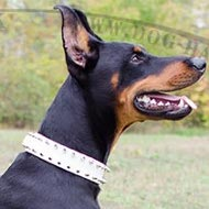 Dog Collar for Doberman of White Leather with Two Rows of Spikes